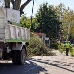 En San Fernando se podaron más de 1800 árboles