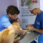Castración y vacunación gratuita de mascotas por el mes de abril