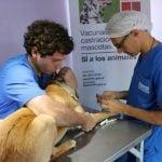 Castración y vacunación gratuita de mascotas en San Isidro