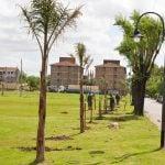 Continúa ejecutándose el Plan de Forestación en San Fernando