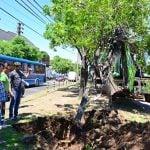Plantan árboles en las zonas aledañas a la calle Uruguay en San Fernando